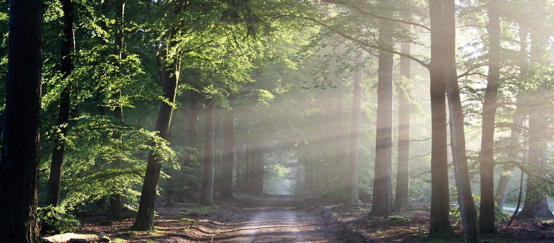 Waldbaden Niederbayern
